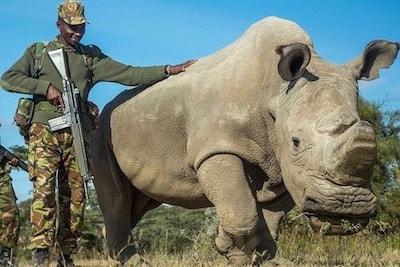 野生動物の違法製品への需要をなくす努力